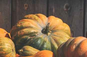 close up photo of orange and green squash